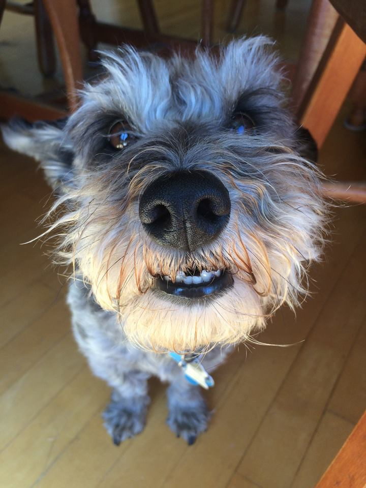 Adorable dog portrait - Vancouver Island, BC