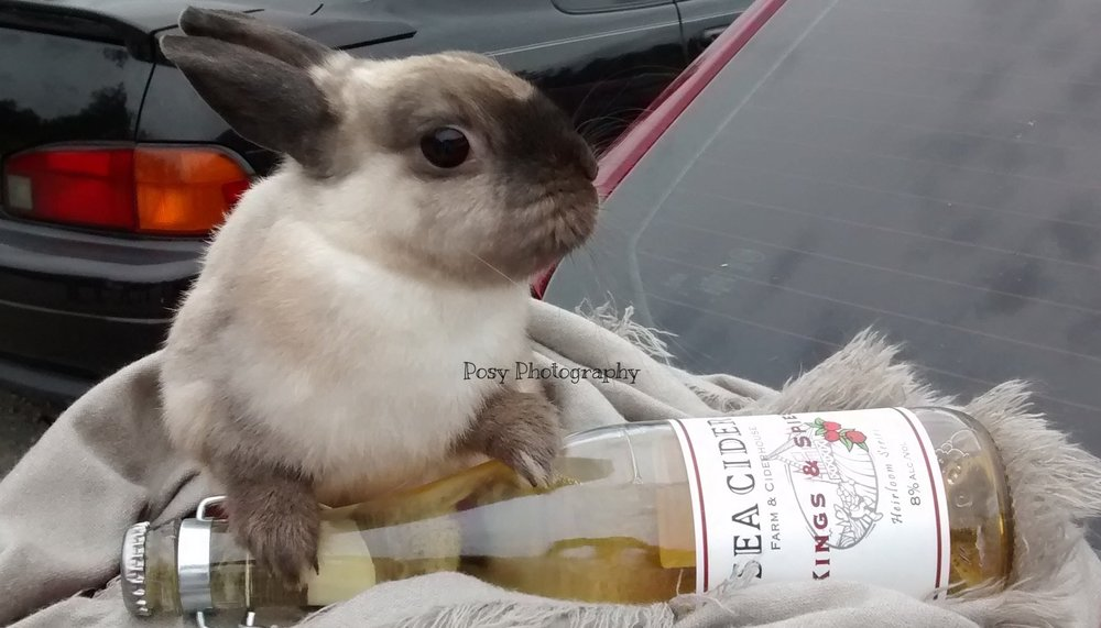 Wine-wuven wabbit pet portrait - Sidney, BC