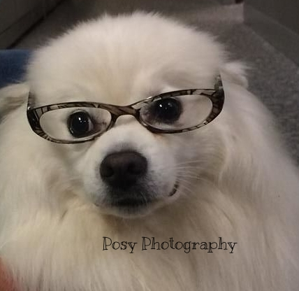 Smart pooch portrait, Victoria, BC