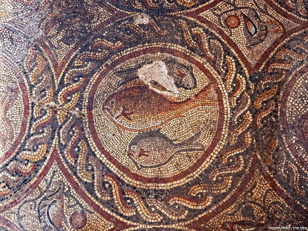 FISH-צילום אסף 10פרץ רשות העתיקות.jpg