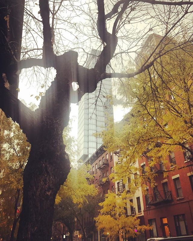 All we needed was a little rain and warm weather. #autumninnewyork