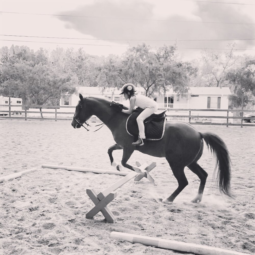 Custom Lesson Programs - Perfect for riders of all ages and skill levels, lesson programs are customized to the individual and move at a comfortable pace to encourage confidence and education.Learn more ➝