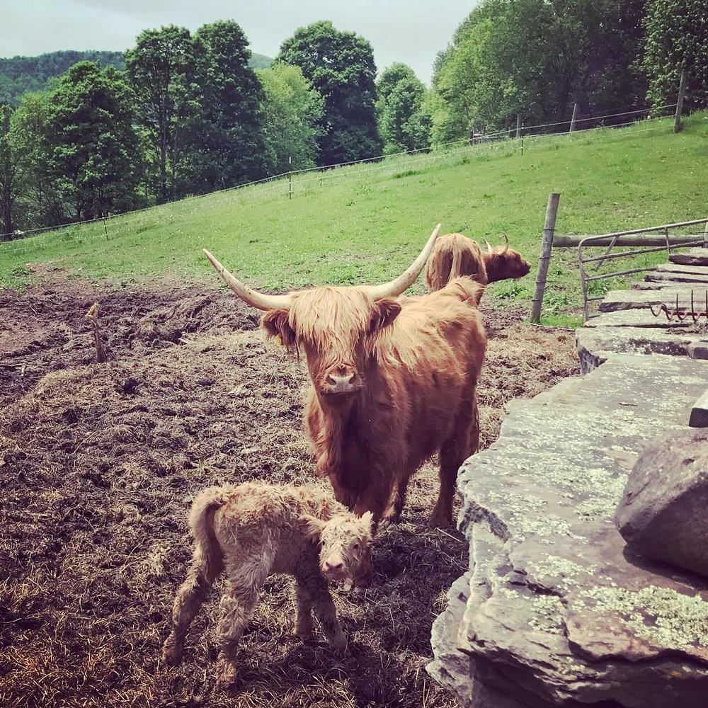 Burn Ayr Farm and Farmstand - Kevin and Kathy raise beautiful Scottish Highland cattle.  Visit their farm stand and explore their many offerings from alpaca yarn to local veggies.