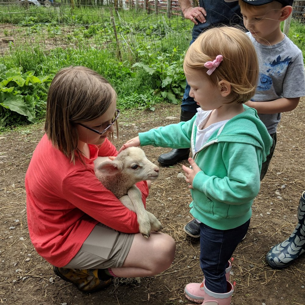 - Meet the lambs, chickens, pigs and even guard geese at Sap Bush Hollow and learn about their sustainable grazing practices.