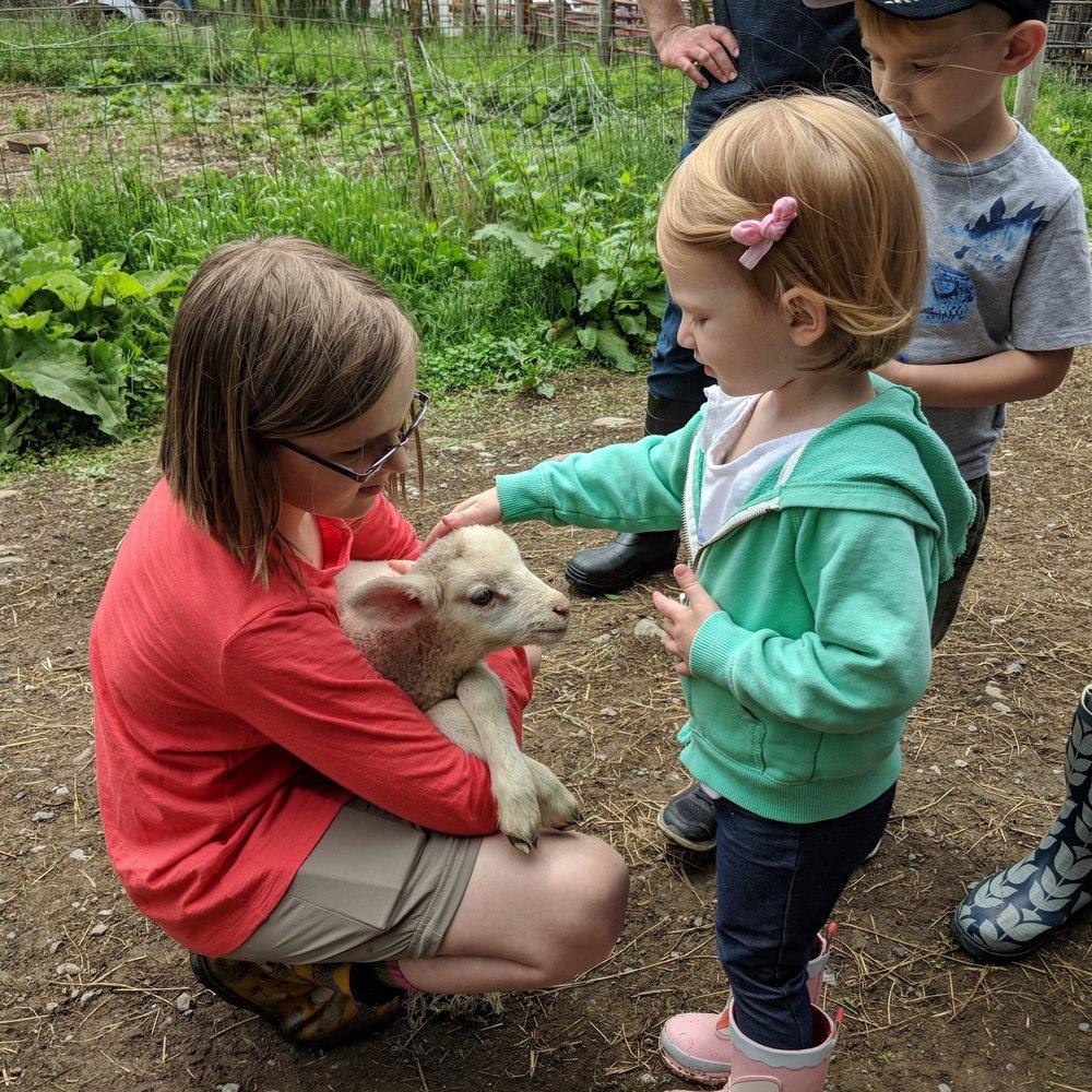 Meet the animals at Sap Bush Hollow Farm -