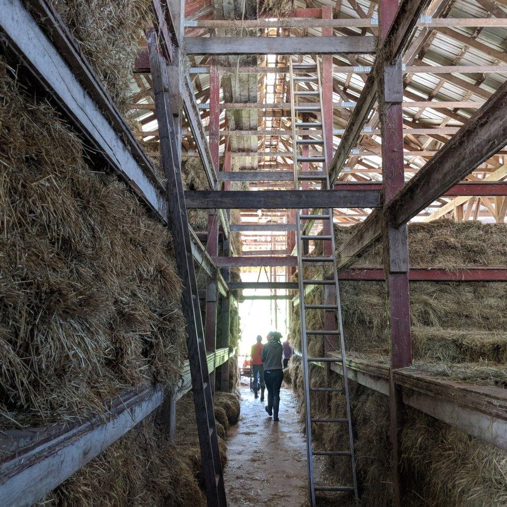 - Explore the hayloft, creamery and barns at Byebrook Farm,then taste the Deysenroths amazing raw milk gouda.