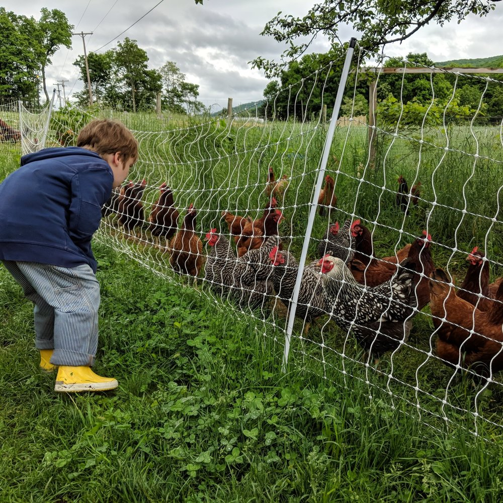 - Tour the fields and meet the animals at Eastbrook Community Farms.Learn about their intentional living community and no-till farming methods.