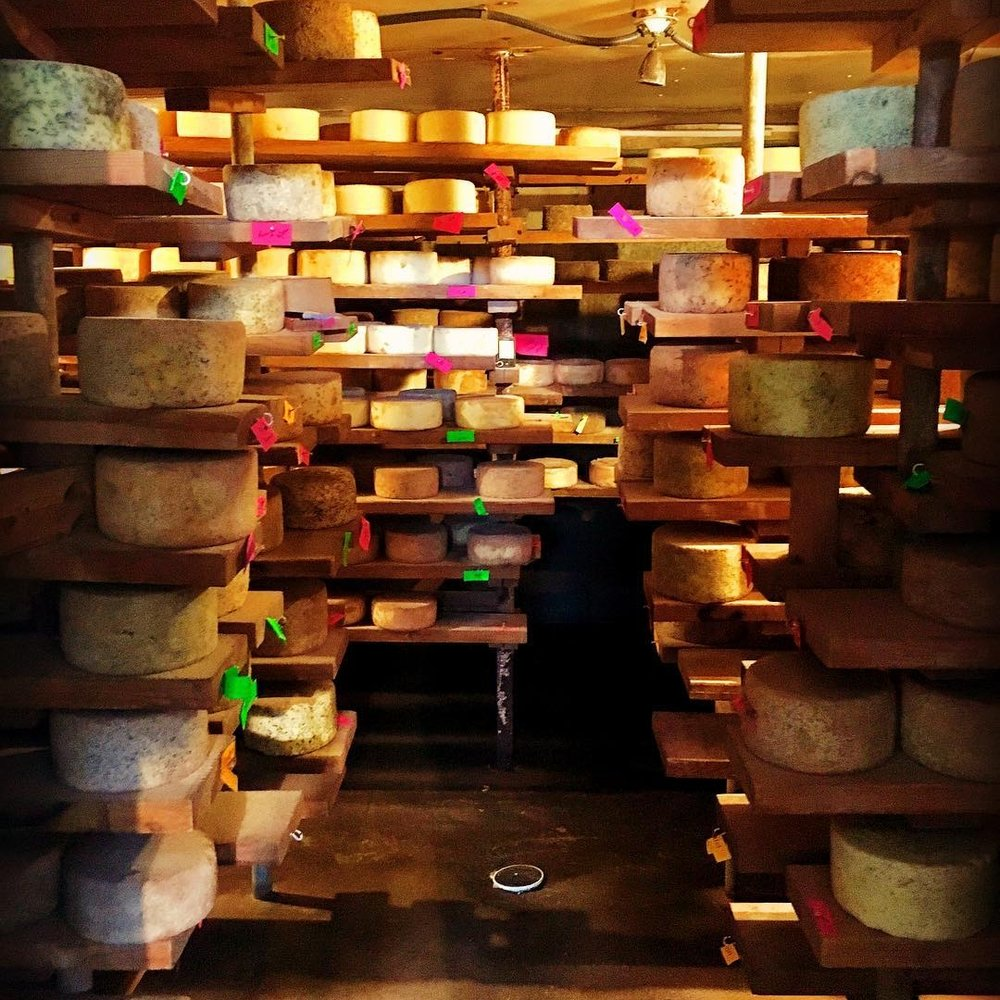 Harpersfield Cheese - Tour the creamery, peek inside the cheese cave and taste the large variety of flavors at Harpersfield cheese!