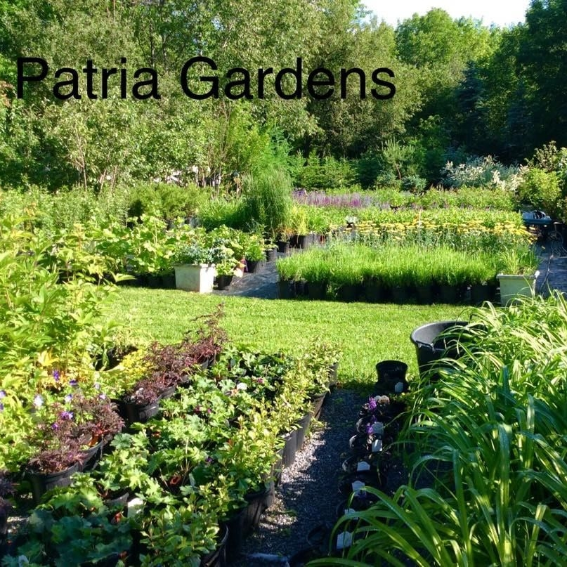Patria Gardens - Patria Gardens has been growing hardy perennials at 2100' elevation in Schoharie county since 1984. Find them at the Pakatakan Farm Market Saturdays May- October. Nursery itself is open by appointment 518 827-5937. Stay at the BNB