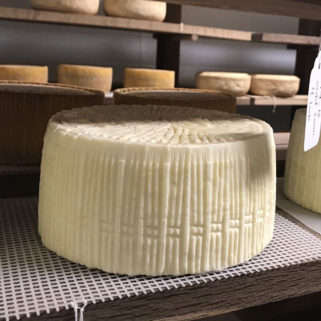 Two Stones Creamery - Meet the animals, Alan the cheesemaker and check out the cheese cave.