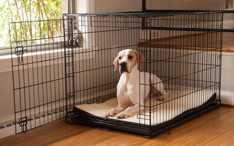 Dog in crate.jpg
