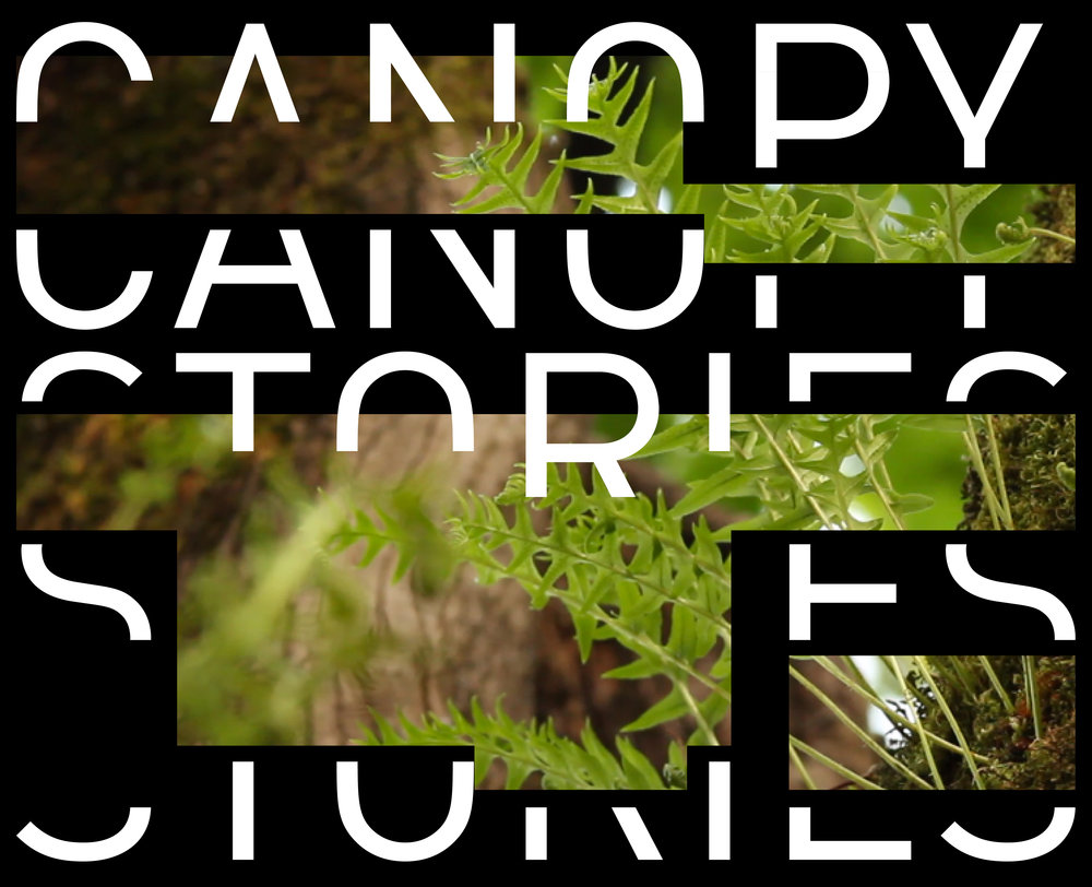 CanopyStories-LandingPage-Mobile-07.jpg