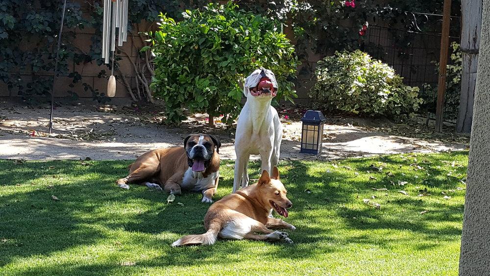 ourdogs.jpg