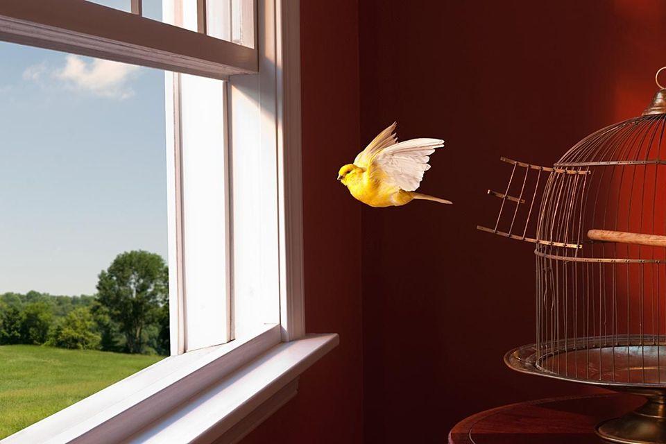 этом картинка попугай за окном терпеливого мастера