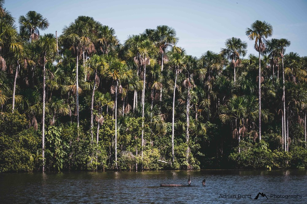 155 | Lake Sandoval, Tambopata national reserve