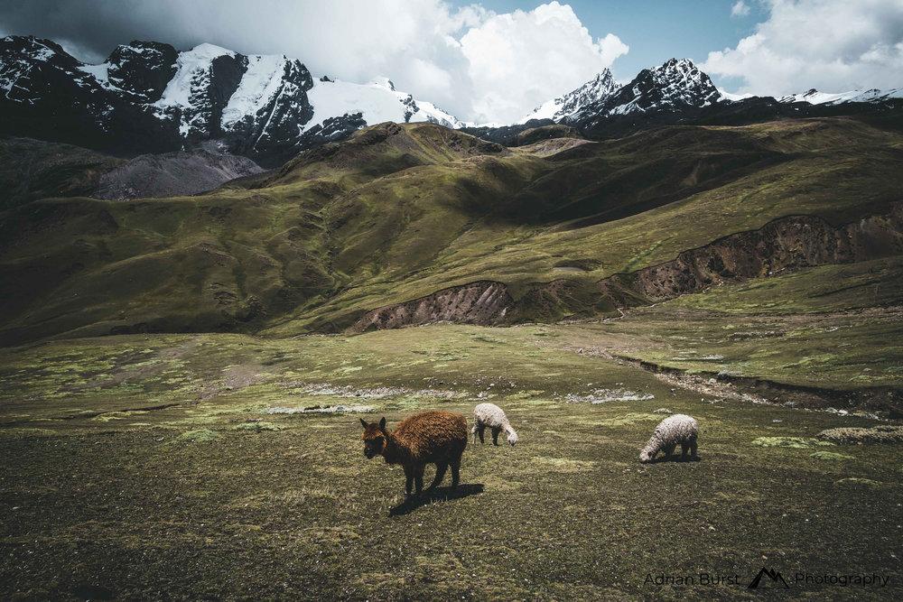 6   Pucamayu valley, Quispicanchi