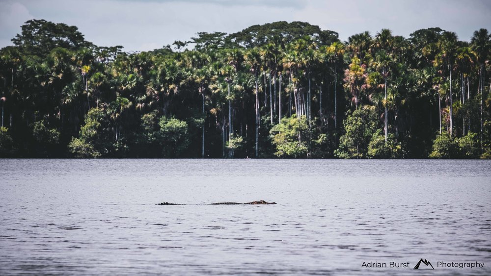 154 | Lake Sandoval, Tambopata national reserve