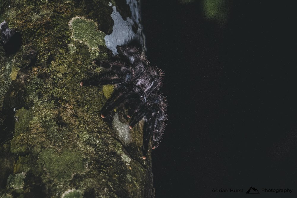 148 | Spider, Tambopata national reserve