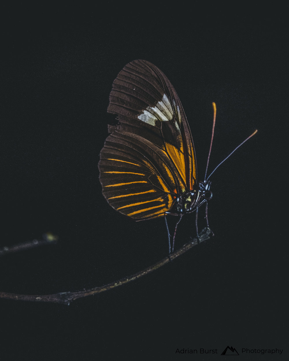 151 | Butterfly, Tambopata national reserve