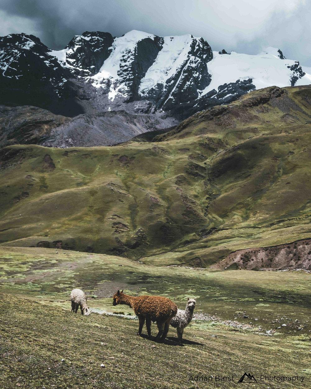 5   Pucamayu valley, Quispicanchi