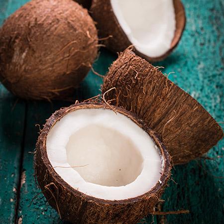Coconut-Palm-450w.jpg