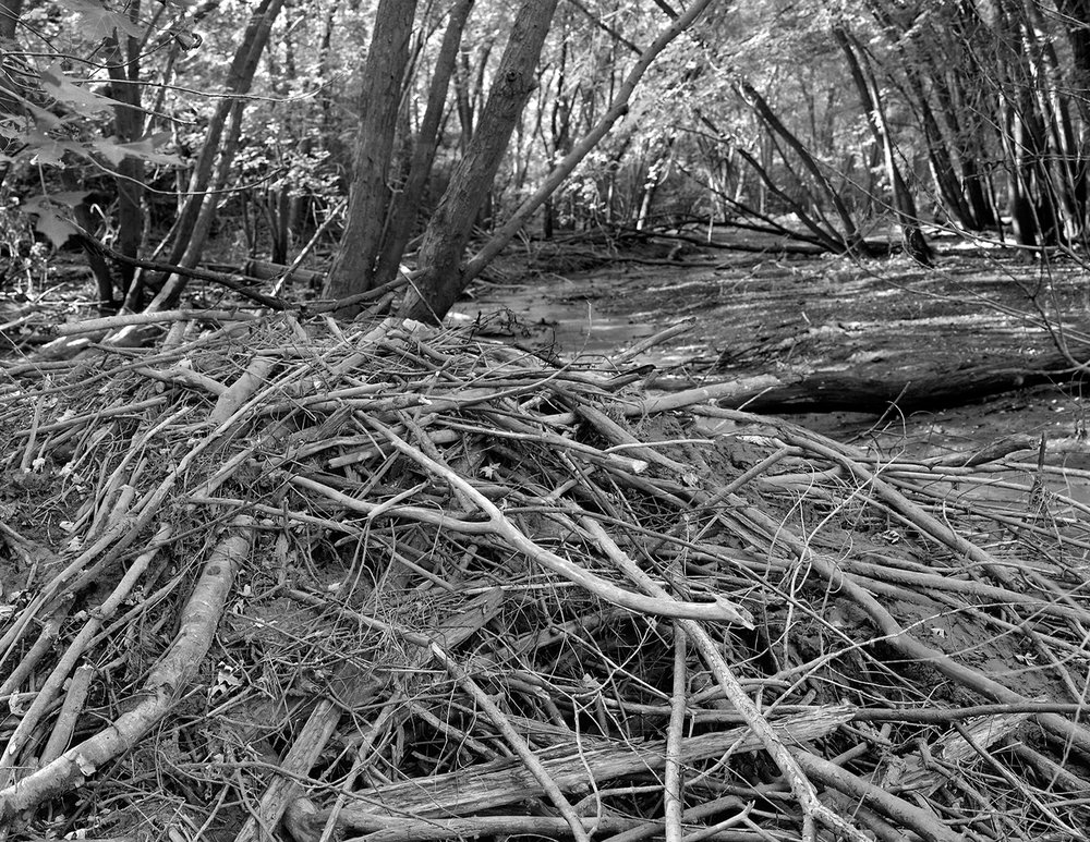 Saint Croix (MN) Floodplain Forest Series, Trout Brook Snag September 2011