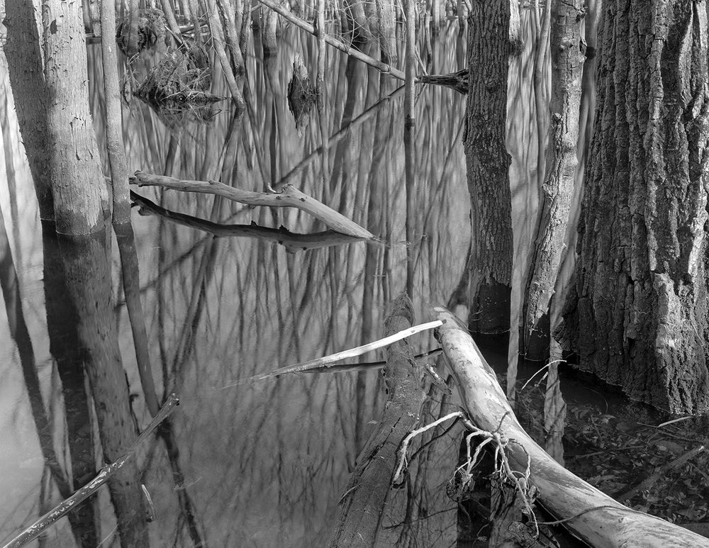 Saint Croix (MN) Floodplain Forest Series, Ghostly Bough April 2009