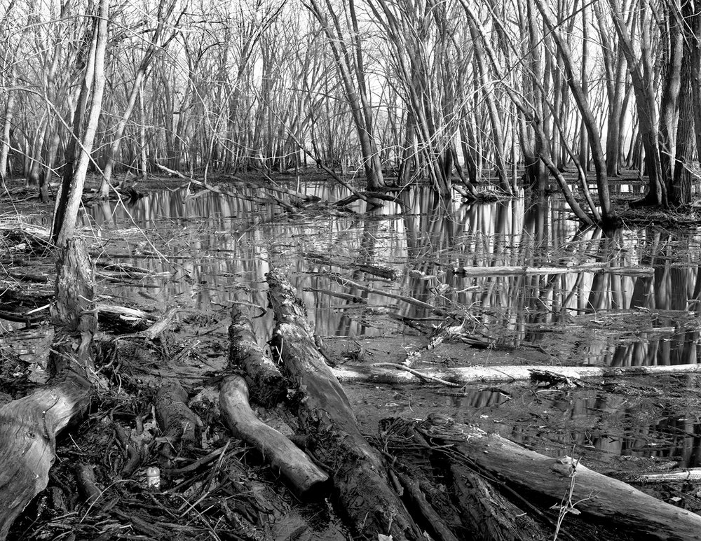 Saint Croix (MN) Floodplain Forest Series, Continuously Inundated November 2010