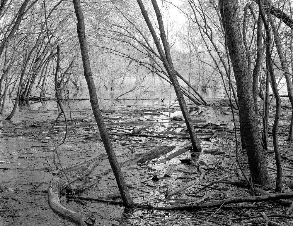 Saint Croix (MN) Floodplain Forest Series, Floating Debris April 2016