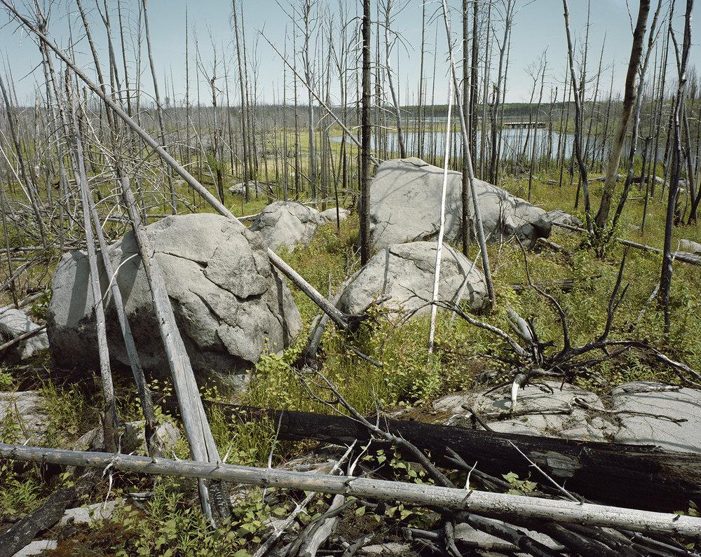 Island River (MN) Pagami Creek Fire Area, Site #4 June 2014