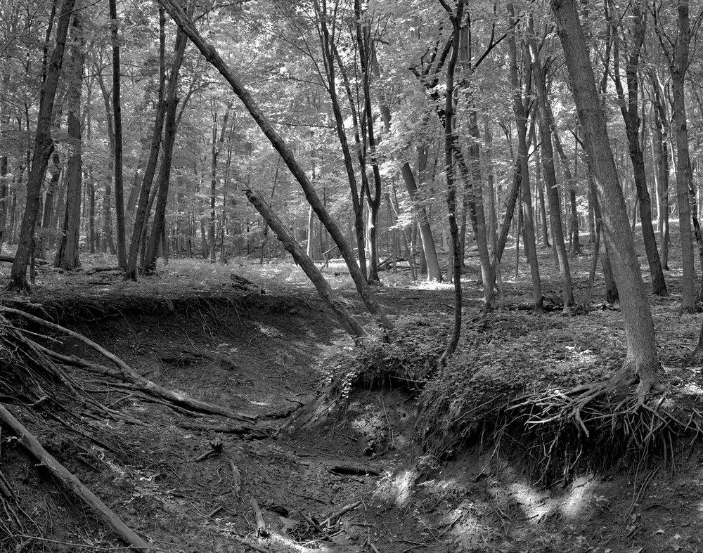 Nerstrand (MN) Big Woods Eroded Ravine After Summer Deluge, August 2010