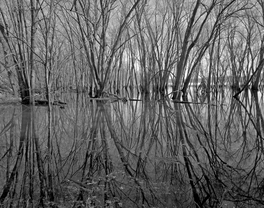 Saint Croix (MN) Floodplain Forest Series, Spring Flood Reflections, April 2018