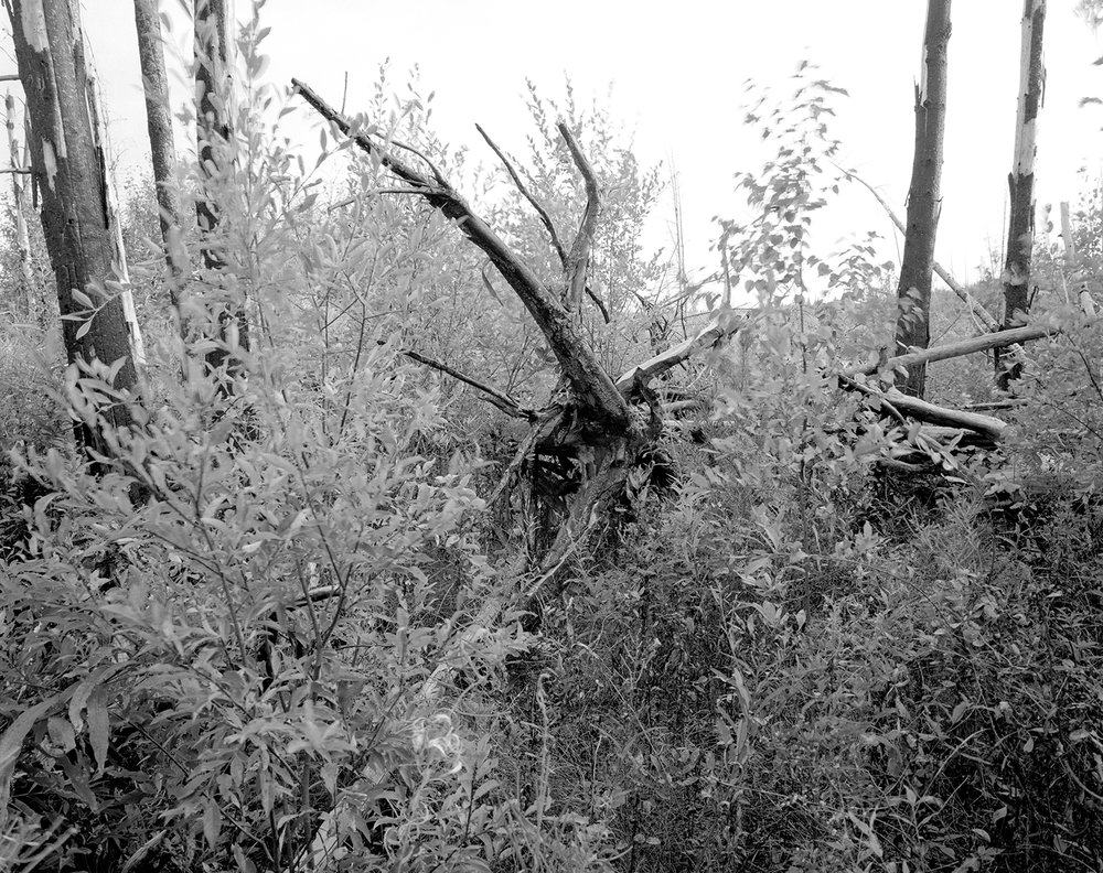 Island River, Site #1 September 2017
