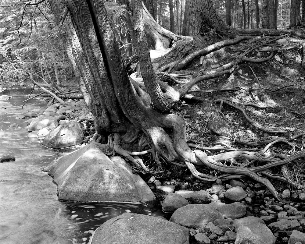 Embarrass River (WI) Cedar Roots, 2006