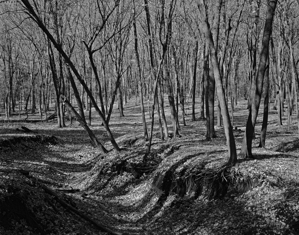 Nerstrand (MN) Big Woods, Eroded Ravine, October 2009 (First Visit)