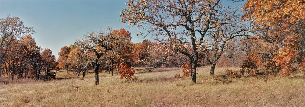 Helen Allison Savanna (MN) Entry Meadows Northwest to Northeast, October 2002