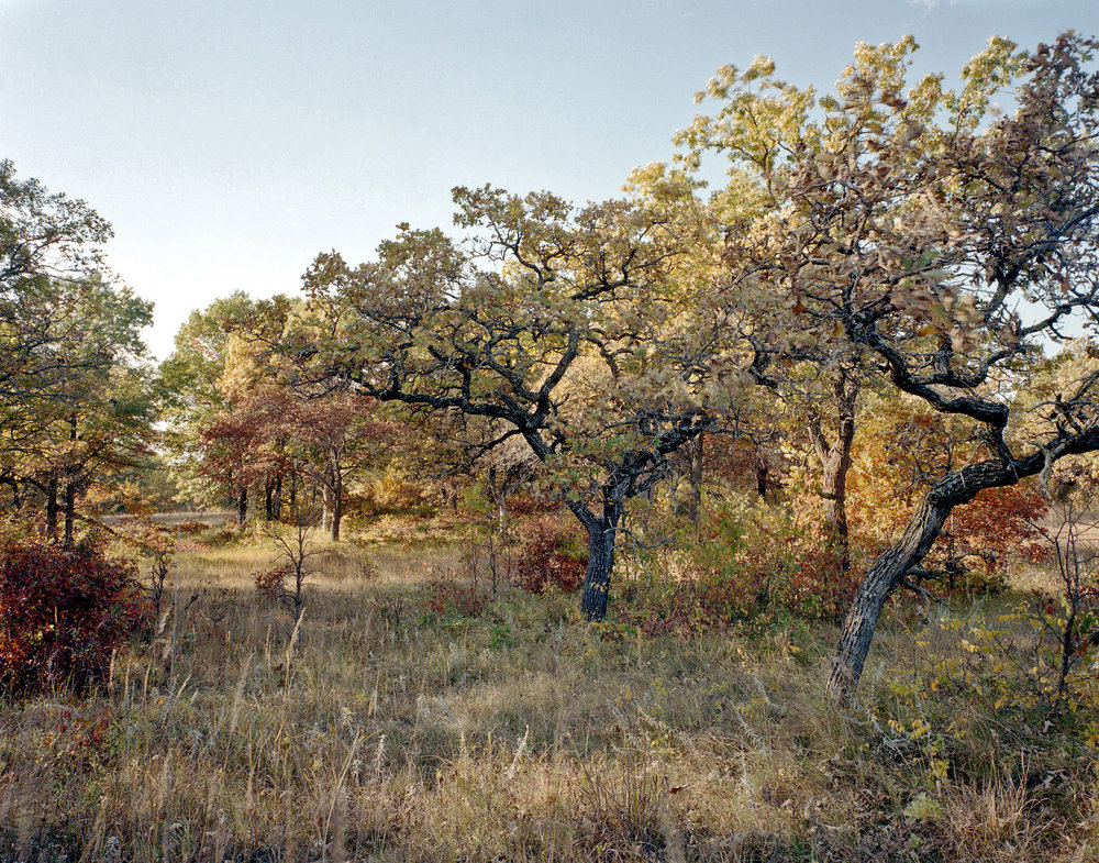 Helen Allison Savanna (MN) Entry Meadow Northwest, October 2013