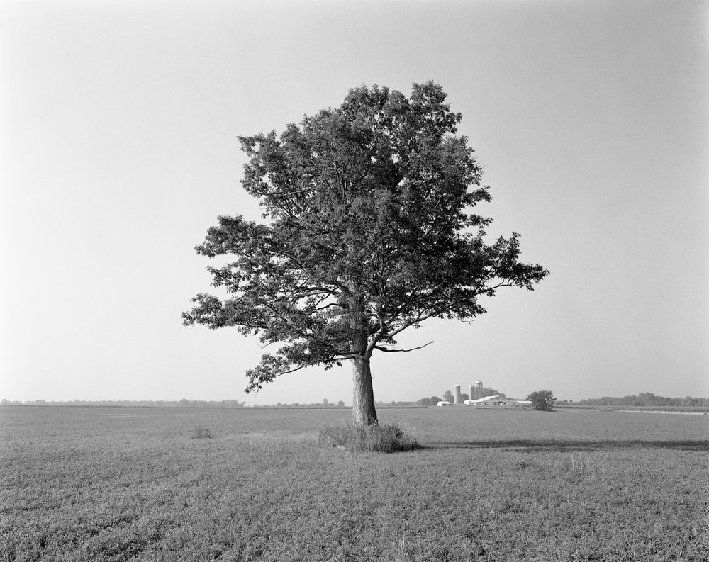 The Lunch Tree, Flanagan Family Dairy Farm, Bear Creek, Wisconsin, August 2005