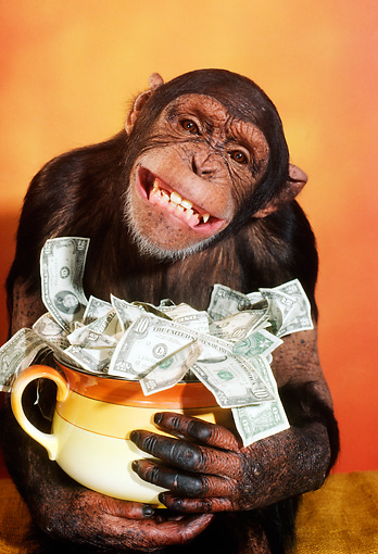 Monkey-with-Money.jpg