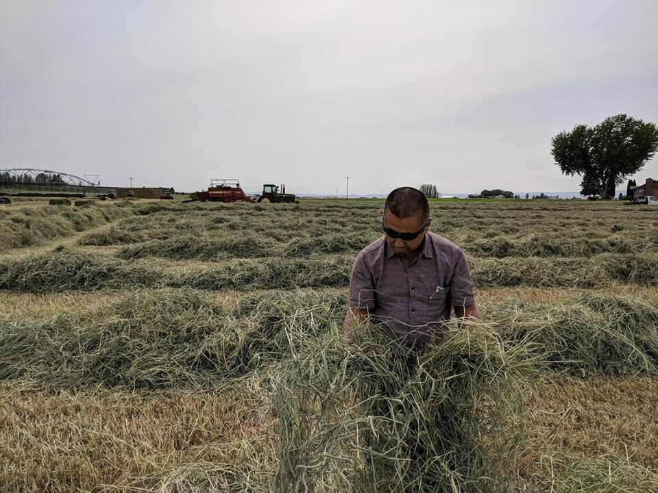Shin inspecting 1st cut Timothy in Ephrata-1.JPG