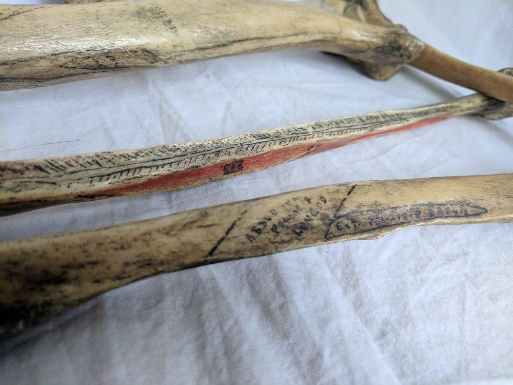Human bones (2).jpg