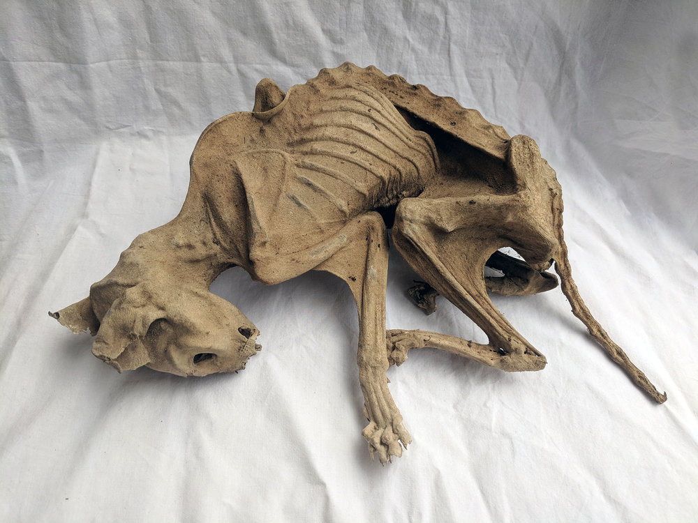 Mummified cat (2).jpg