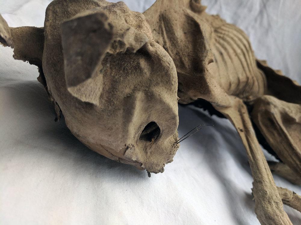 Mummified cat (3).jpg