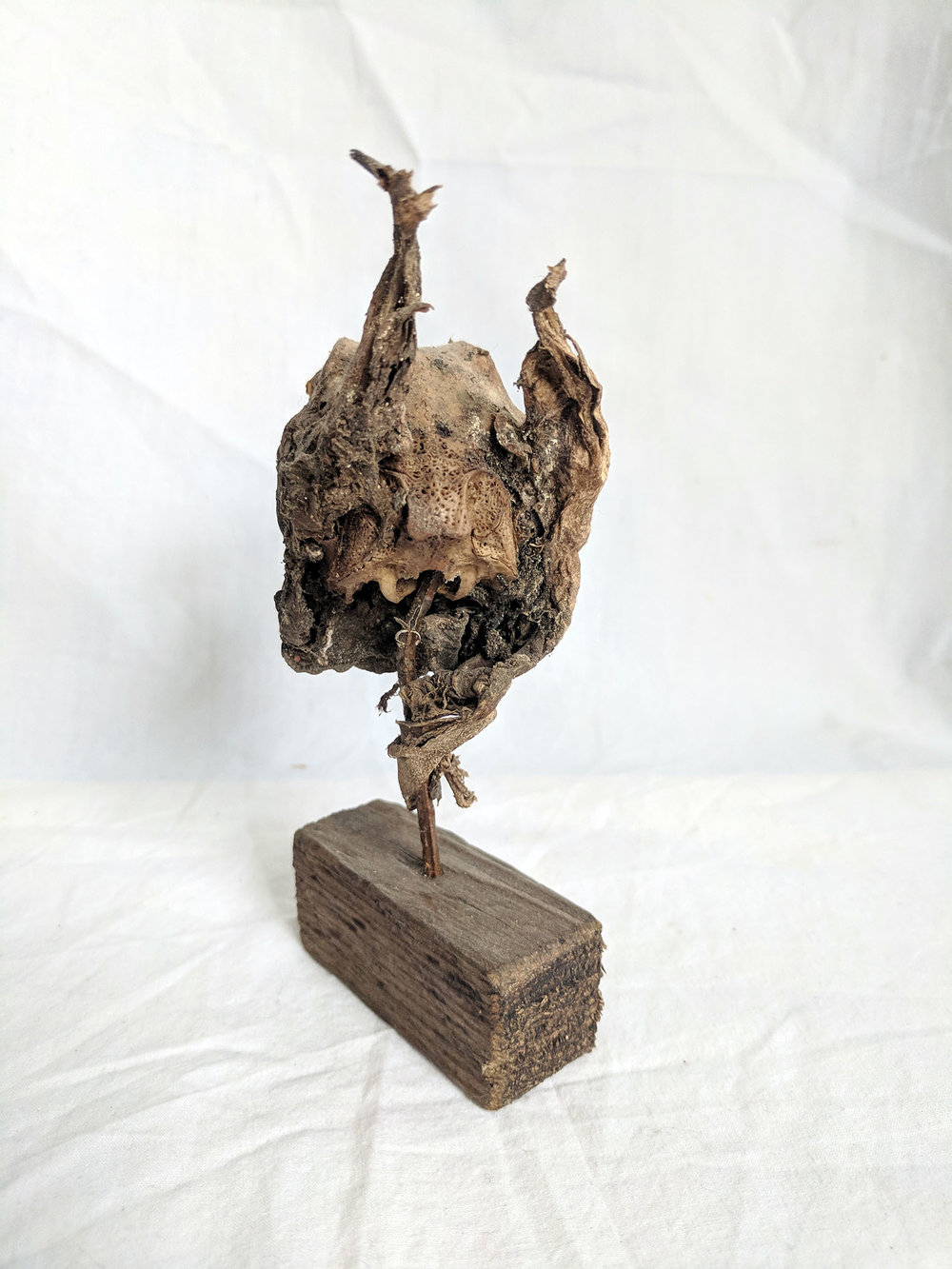 Mummified rabbit head (2).jpg