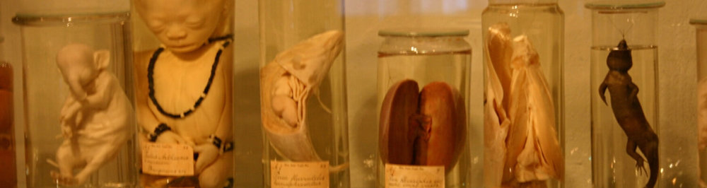 Wet specimens -