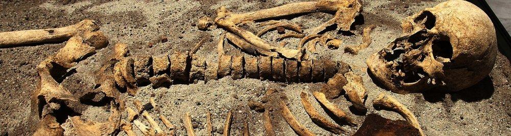 Human remains -
