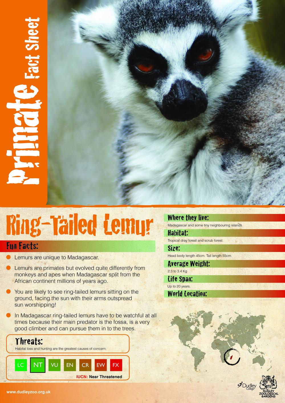 Katie's Lemur final version-01.jpg