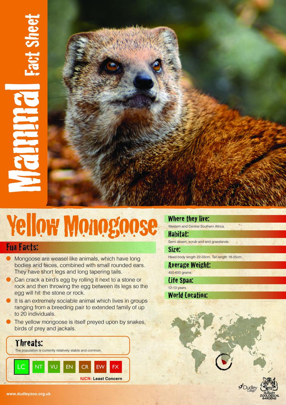 Katie's Yellow monogoose-01.jpg