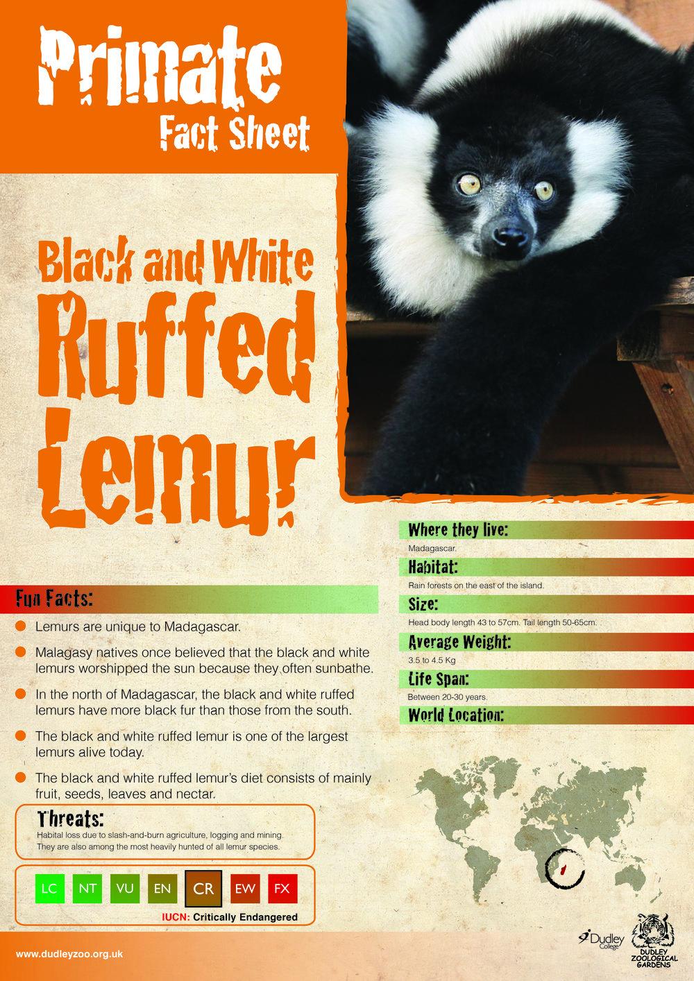 Caron's Black and White Ruffed Lemur-01.jpg