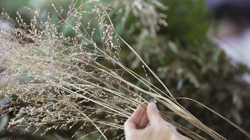 Gold grass.jpg